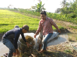 AYIP youth worked on field to collect agriculture wastes and to instruct farmers with technical requirements of underground composting models