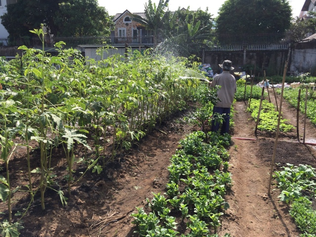 Our plot for the training is located within a system of a big community garden, where youth easily interact with professional farmers and families with parents and kids spending free time to grow, to harvest and to cook right at the garden. The objective is simple: for them to know how to work with ecological elements, but not forget the idea of a system. This illustrates a picture of sustainability in which the output of a certain production process can be used as the input for one another.