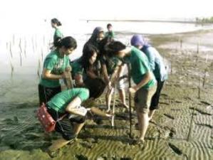 VN_Mangrove tree planting